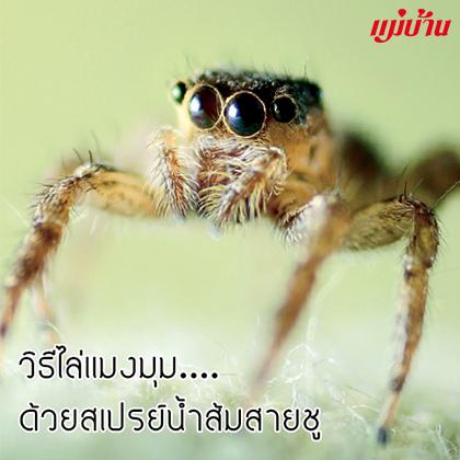 วิธีไล่แมงมุม....ด้วยสเปรย์น้ำส้มสายชู สำนักพิมพ์แม่บ้าน