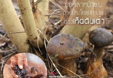 บอกลาหน้าฝน ด้วยประโยชน์ทางยาของเห็ดตับเต่า... สำนักพิมพ์แม่บ้าน