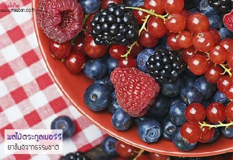 ผลไม้ตระกูลเบอร์รี ยาชั้นดีจากธรรมชาติ สำนักพิมพ์แม่บ้าน