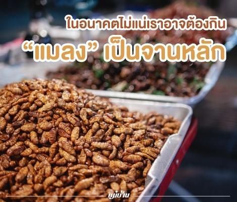 """ในอนาคตไม่แน่เราอาจต้องกิน """"แมลง"""" เป็นจานหลัก สำนักพิมพ์แม่บ้าน"""